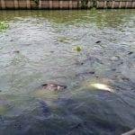 ร้านพวงหรีดหรีดไทย วัดกระทุ่มเสือปลา ทำบุญ