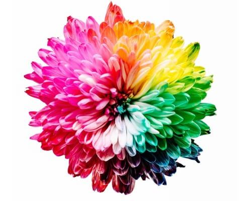 ดอกไม้พวงหรีดโทนสีใดสามารถแทนความหมายของผู้ให้ได้ลึกซึ้งตรงใจที่สุด