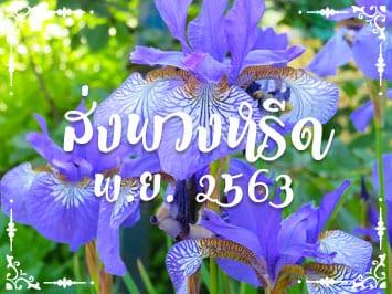 Fi Reed Thai 11 2020
